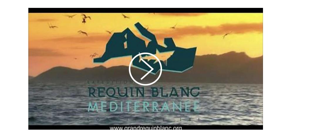 Teaser de l'expédition Requin Blanc de Méditerranée