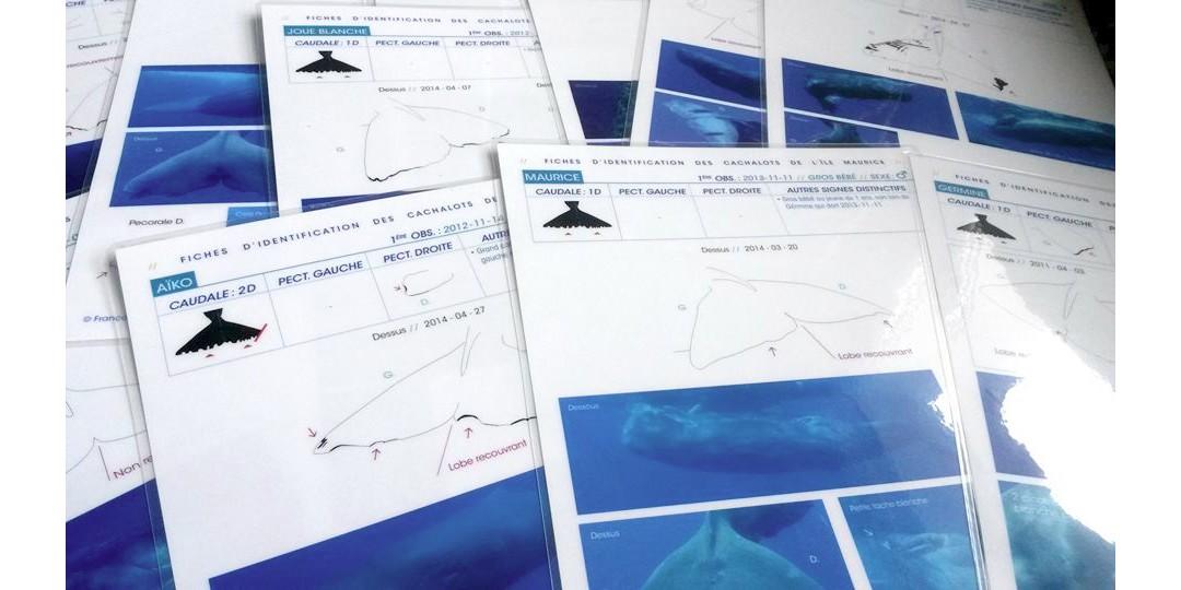 Fiches d'identification des cachalots de l'île Maurice…