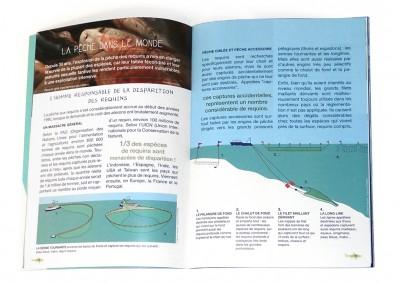 Brochure & illustration schématique – vectorielle