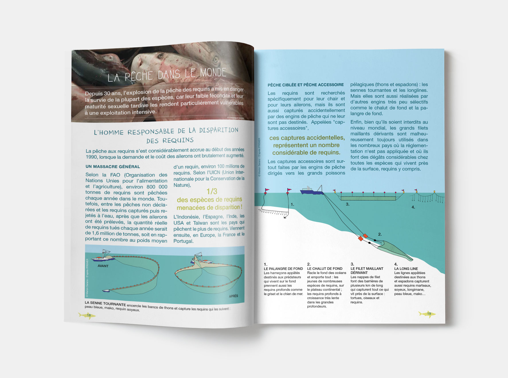 MESit_ASPAS_brochure-Requins_illustration_1