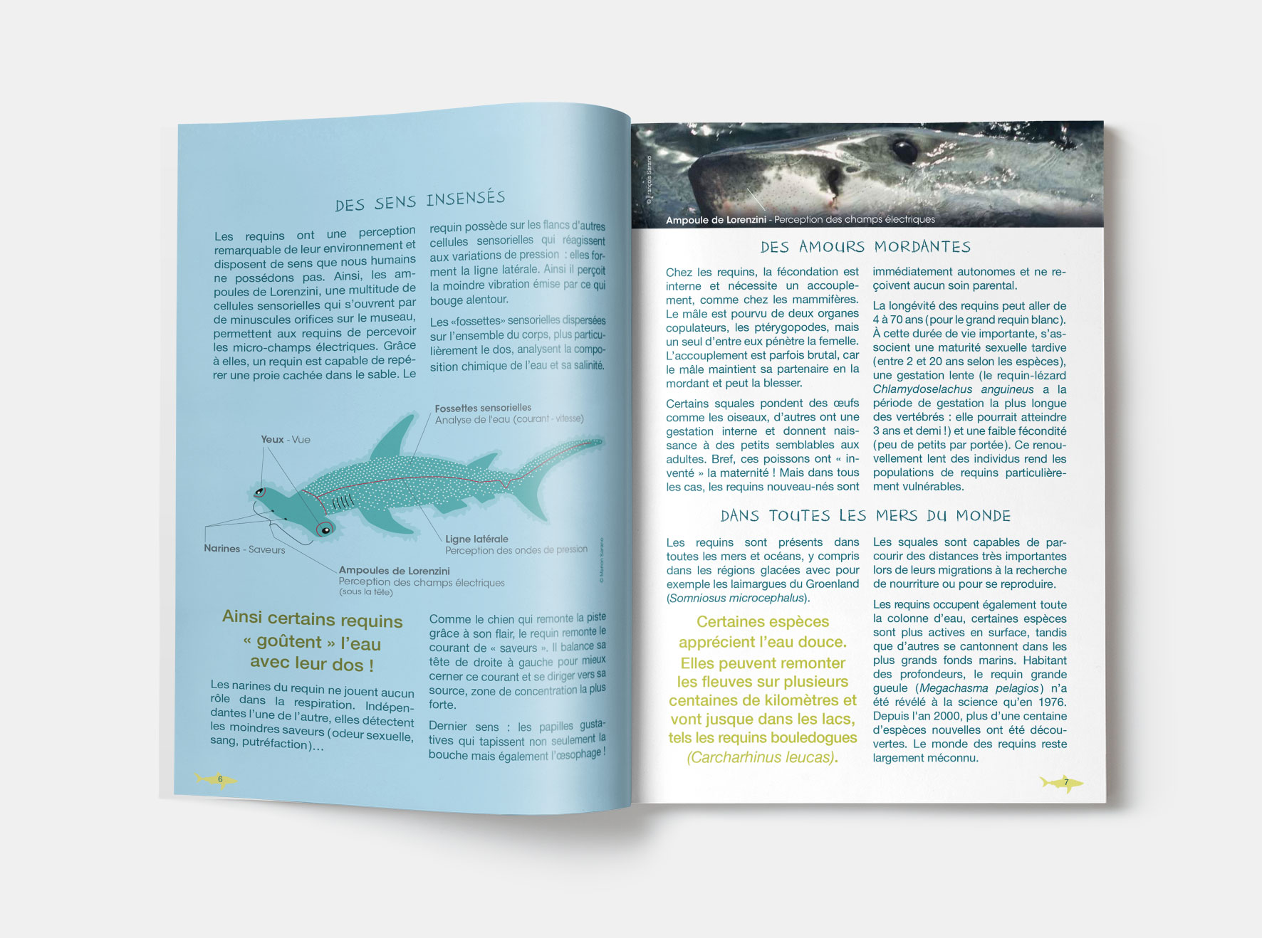 MESit_ASPAS_brochure-Requins_illustration_2